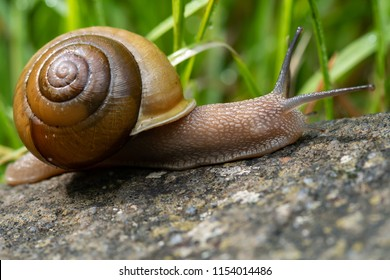 Profile of Snail Crawling on Tree Trunk