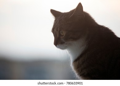 Profile of a thoughtful cat