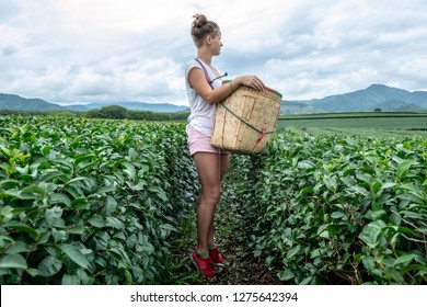Profile view of young sexy woman with the harvest basket in a tea plantation - ecotourism in Asia