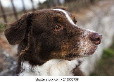 Profile of white and brown dog