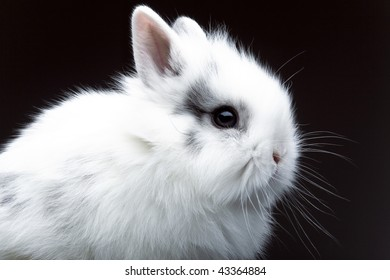 Profile of white rabbit on black background