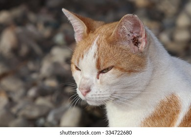 A Profile of a Wild Feral Cat in the Outdoors