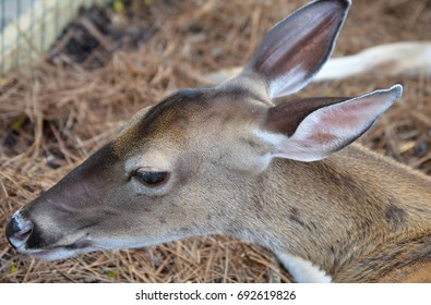 profile of young deer's face