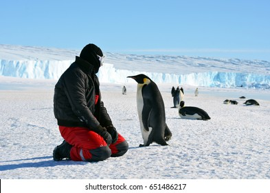 Progress station, Antarctica  January 10, 2016: Emperor penguin chick and the man in the red suit.Close-up