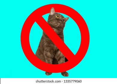Prohibition sign on the background of the cat. Cats carriers of toxoplasmosis