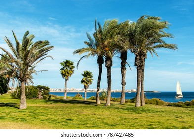 Promenade with palm trees, Torrevieja,Spain