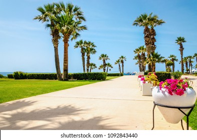 Promenade with tall palm trees leading from the garden of a luxury hotel to the sandy beach