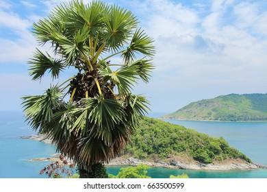 Promthep cape, Phuket, Thailand. Palm tree on background of island. View point of Phuket.