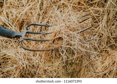 prong with hay