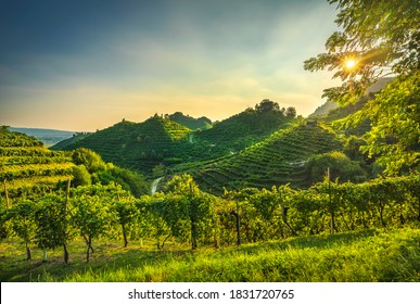 Prosecco Hills, vineyards at sunset. Unesco Site. Farra di Soligo. Veneto, Italy, Europe. - Shutterstock ID 1831720765