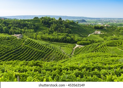 Prosecco vineyards at summer, Valdobbiadene, Italy. Taken on July 17, 2016.