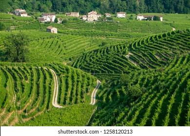 Prosecco vinyards near Valdobbiadene
