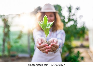 Protect nature. Sapling of plant in woman's hand on green nature background. Small plant in female hands. Woman holding and planting new tree.Woman was planting new born in garden background