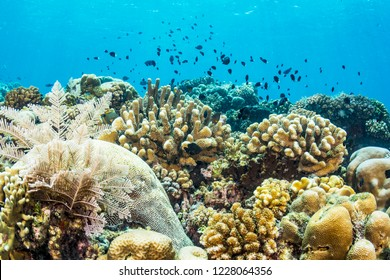 A protected, healthy coral reef in Indonesia.