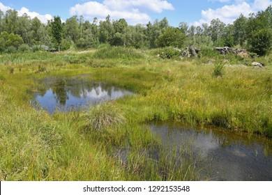 Protected wetland, aqutic habitat