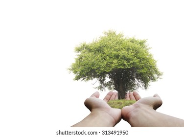 Protecting the forest,Plant a tree:Trees in hands. Ecology concept