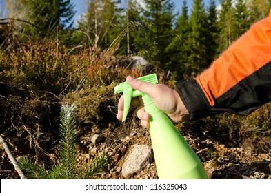 Protecting pine plant against wildlife damage