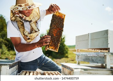 In protective mask. Beekeeper works with honeycomb full of bees outdoors at sunny day.