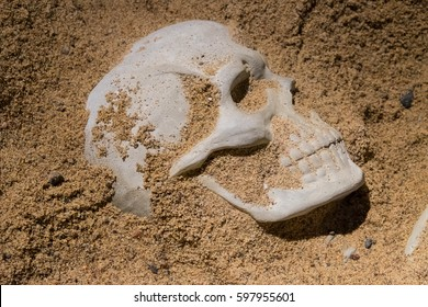 protruding portion of a human skull out of the sand