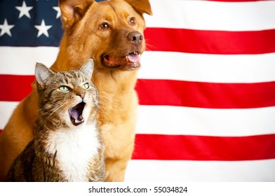 Proud American pets with US flag in as background. Focus on cat with opened mouth