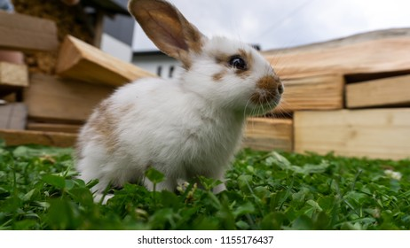 Proud rabbit looking in the distance