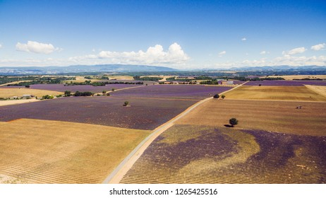 Provence, France. Aerial view of Valensole Plateau with lavender fields
