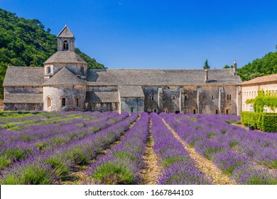 Provence, France. Blooming purple lavender fields at Senanque monastery.
