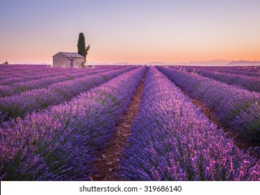 Provence, France.A Lonely house standing in a lavender field at sunrise.