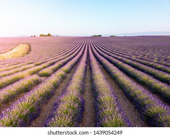 Provence, Valensole Plateau. Very unique view of an infinity lavender field in full bloom, as seen from above. Southern France