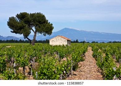 Provence's Mount Ventoux and Vineyards