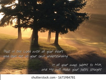 Proverbs 3:5-6 NIV bible verse about trusting the Lord with brilliant sun beams cascading through evergreen branches illuminating a winding path.