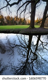 Pruhonice park around Pruhonice castle in winter. The Czech Republic, Europe. Big tree reflected in a pond.