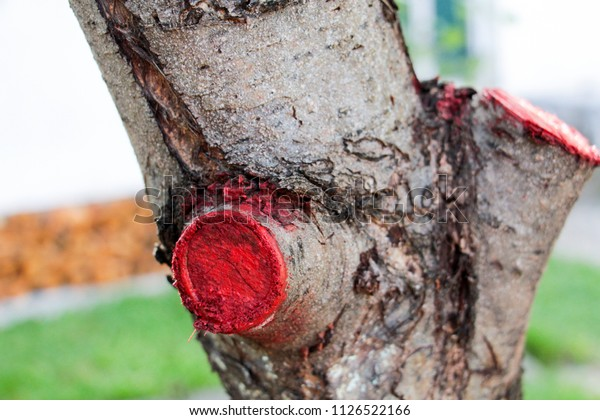 pruned and protected  tree