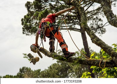 pruner in action with his chainsaw