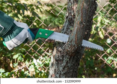 Pruning fruit trees garden with a hacksaw