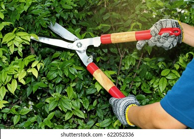 Pruning of ornamental trees by scissors