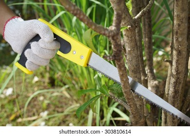 Pruning plants in the garden with a hacksaw