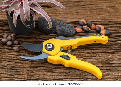 Pruning shears for cutting branch the tree  on old wood background.