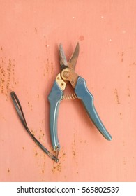 pruning shears on metal background