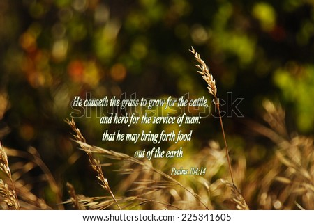 Psalm 10414 He Causeth Grass Grow Stock Photo Edit Now 225341605