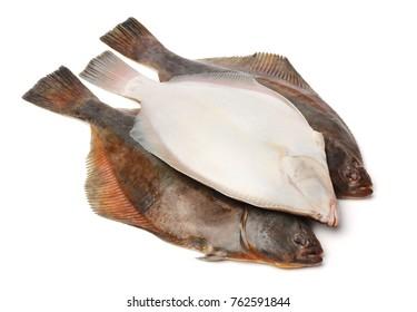 Psetta maxima (Turbot Fish) isolated on white background