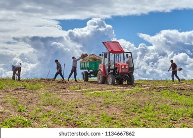 Pskov, Russia - July 4, 2018: Agricultural works on farmer field, group of peasants clears earth of dry grass, loading her into body of tractor trailer, by means of manual garden pitchfork.
