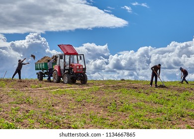 Pskov, Russia - July 4, 2018: Field works in rural areas, several workers of farm clear soil of an old grass, using a manual agricultural pitchfork and farmer tractor for her transportation.