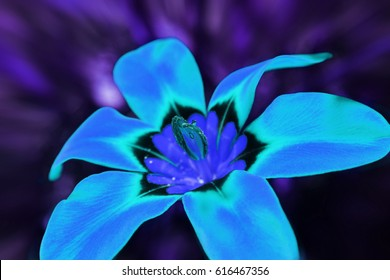 Psychedelic Blue Flower High Quality