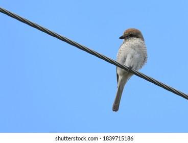 ptak na gałęzi drzewa, nature - Shutterstock ID 1839715186