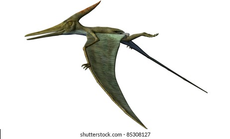 Pteranodon Dinosaur wings down flying. From the Late Cretaceous geological period of North America in present day Kansas, Alabama, Nebraska, Wyoming, and South Dakota, one of the largest pterosaur.