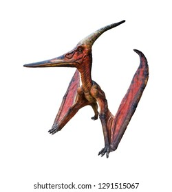 Pteranodon is a genus of Pterosaur and lived during the late Cretaceous period isolated on white background with clipping path