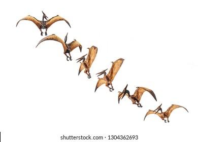Pteranodon (Pterodactyl) Dinosaur on white background.