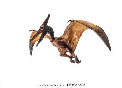 Pteranodon (Pterodactyl) Dinosaur on white background   .