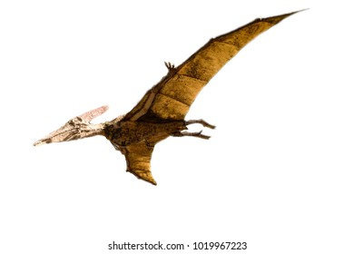 Pterodactyls isolated on the white background
